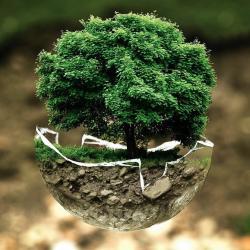 Traducción en el ámbito de la ecología y el medio ambiente (EN-ES)